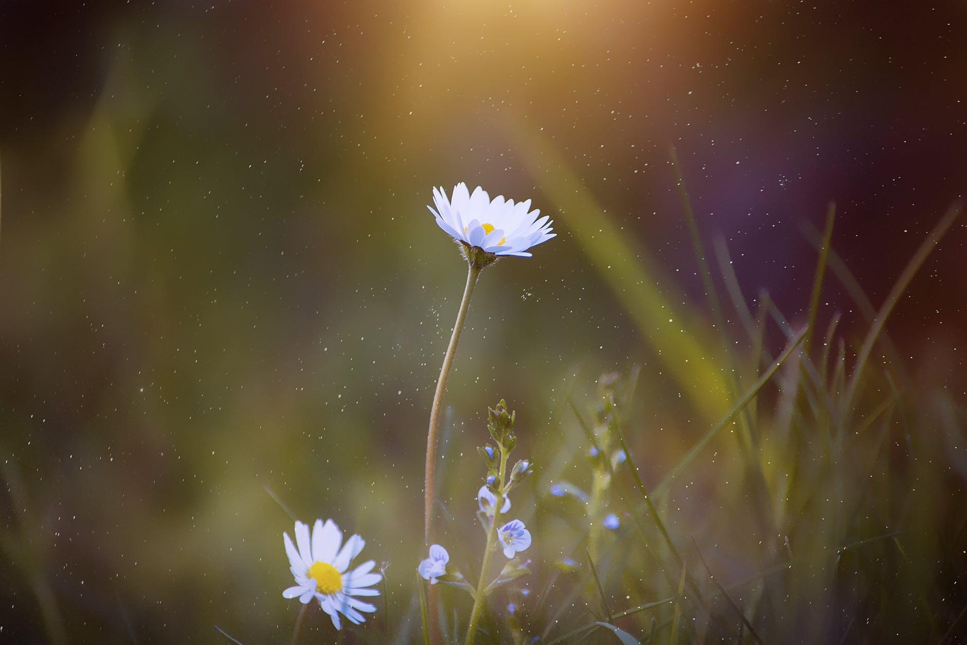 Accepteer jouw bloemencyclus